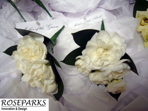Bridal Party - Ladies Corsages