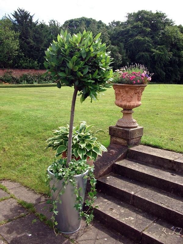 Garden - Bay Tree