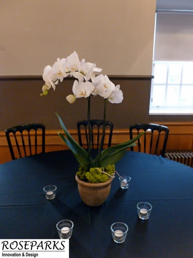 phalanopsis-orchid-plant